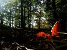 Herbst_geissberg
