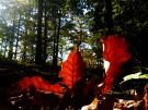 Herbst_geissberg_1