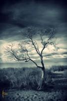 tree_monkey_mia_sw_neu