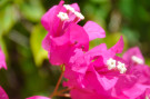 flower_monkey_mia