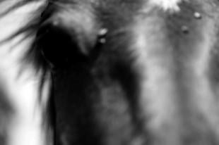 mallorca_horse