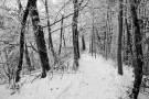 winter_9_1